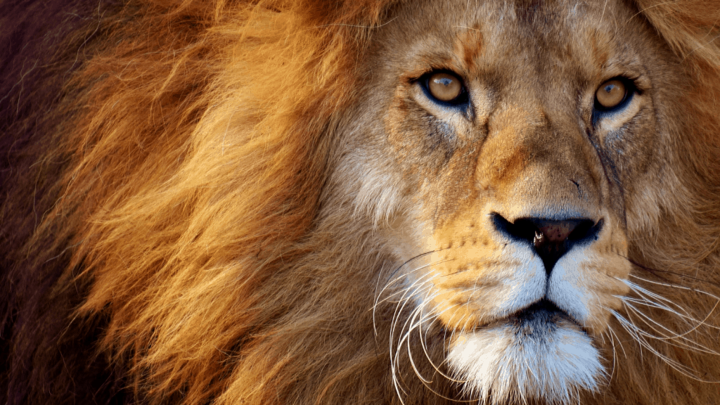 Gods character through C.S.Lewis' Aslan and its application to Christian deconstruction